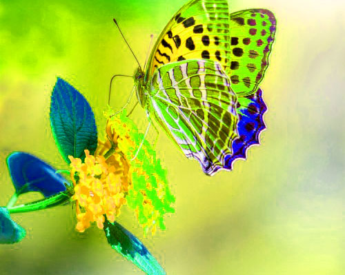 Butterfly Whatsapp Dp Pictures Free