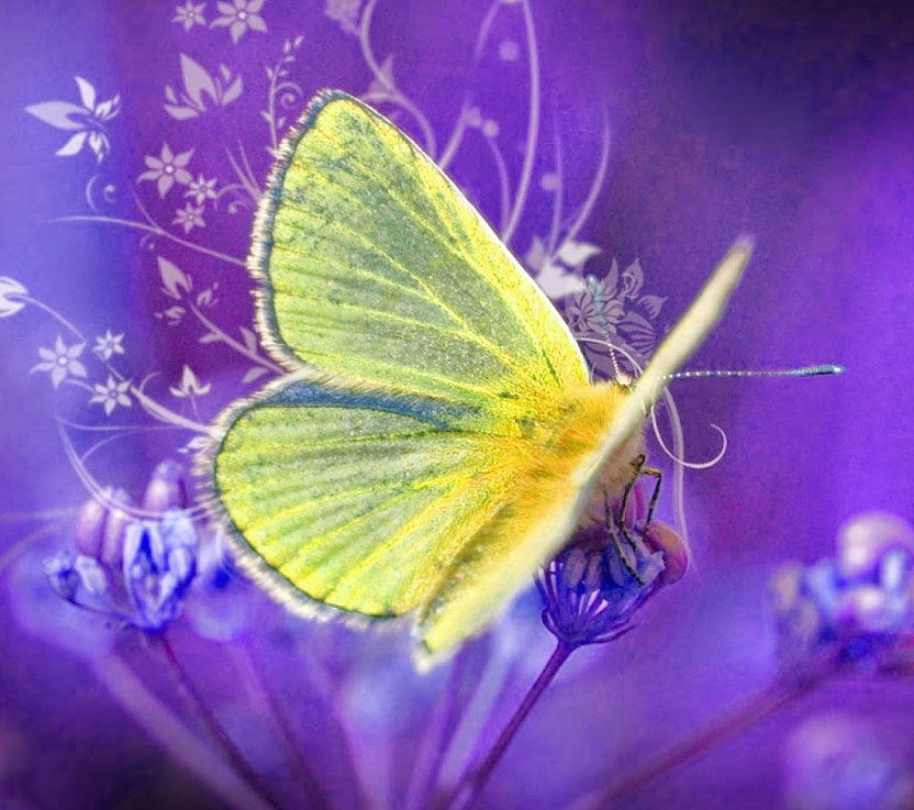 Butterfly Whatsapp Dp Pictures Images