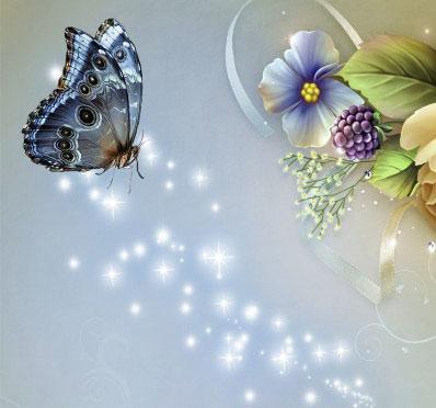 Butterfly Whatsapp Dp Wallpaper Free