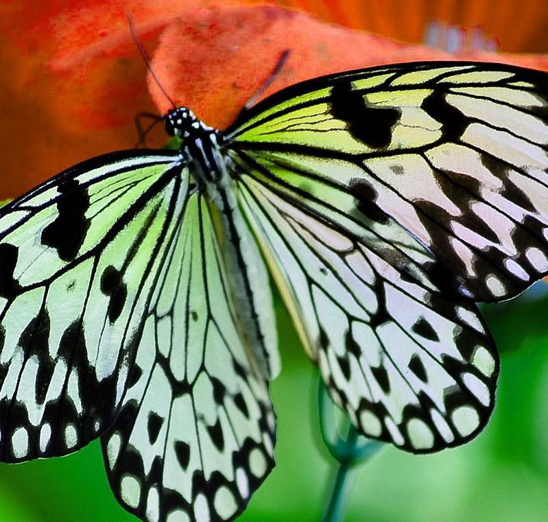 Butterfly Whatsapp Dp Wallpaper HD Pics