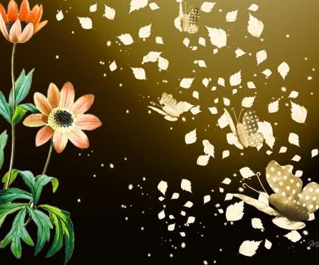 Butterfly Whatsapp Dp Wallpaper Images