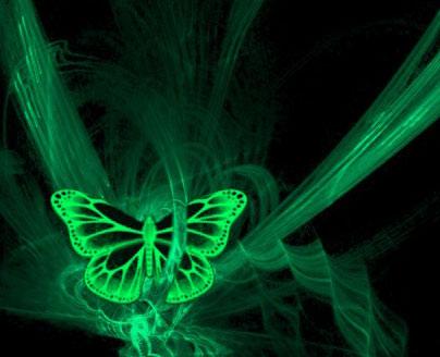 Butterfly Whatsapp Dp