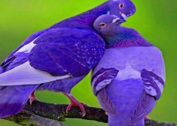 Free Very Nice Dp Photo Free