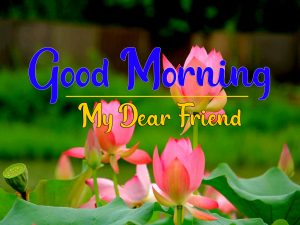 Good Morning Images Pics Pictures