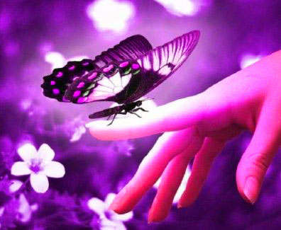 New Butterfly Whatsapp Dp Download Free