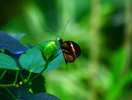 New Butterfly Whatsapp Dp Download Images