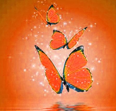 New Butterfly Whatsapp Dp Free Hd