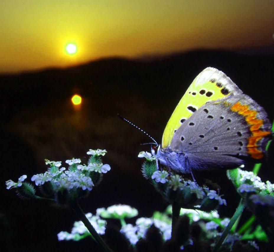 New Butterfly Whatsapp Dp Hd Free