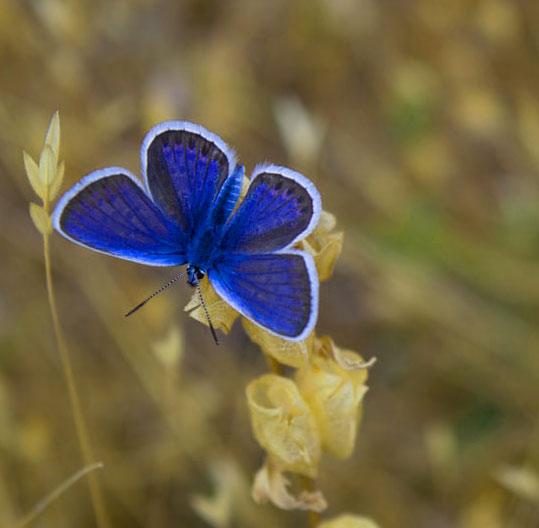 New Butterfly Whatsapp Dp Hd