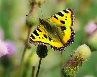 New Butterfly Whatsapp Dp Images Download