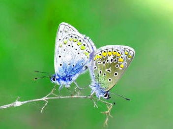 New Butterfly Whatsapp Dp Images Hd