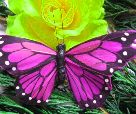 New Butterfly Whatsapp Dp Images Photo