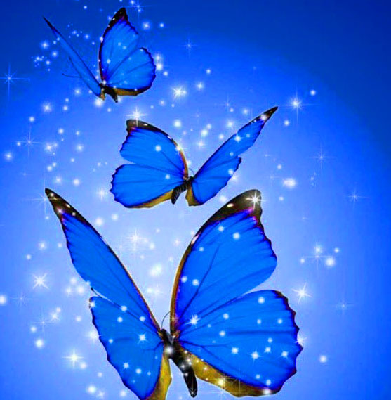 New Butterfly Whatsapp Dp Images Pics