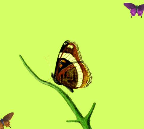 New Butterfly Whatsapp Dp Images Pictures