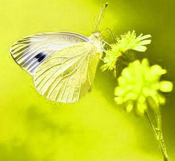 New Butterfly Whatsapp Dp Images Wallpaper