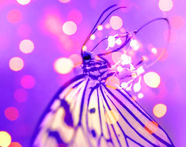 New Butterfly Whatsapp Dp Images