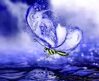 New Butterfly Whatsapp Dp Photo Hd
