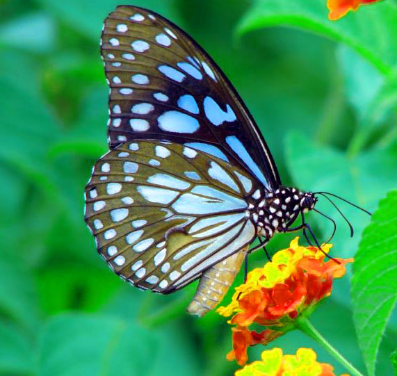 New Butterfly Whatsapp Dp Photo Images