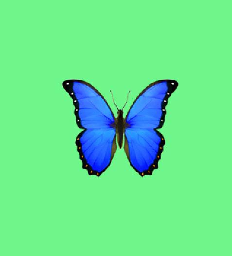 New Butterfly Whatsapp Dp Photo Wallpaper