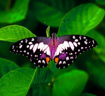 New Butterfly Whatsapp Dp Photo