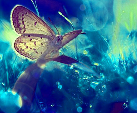 New Butterfly Whatsapp Dp Pics Hd