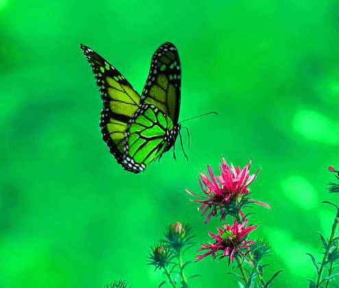 New Butterfly Whatsapp Dp Pics Images