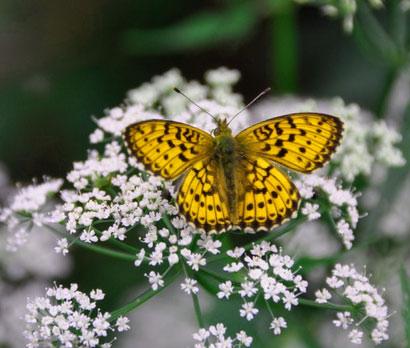 New Butterfly Whatsapp Dp Pics Wallpaper Hd