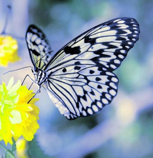 New Butterfly Whatsapp Dp Pics Wallpaper