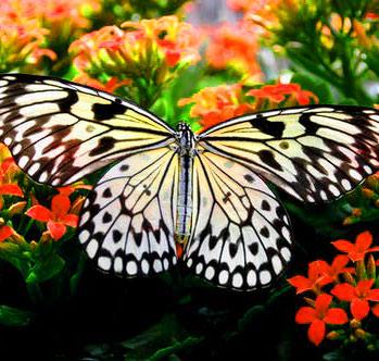 New Butterfly Whatsapp Dp Pics