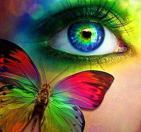 New Butterfly Whatsapp Dp Pictures Free