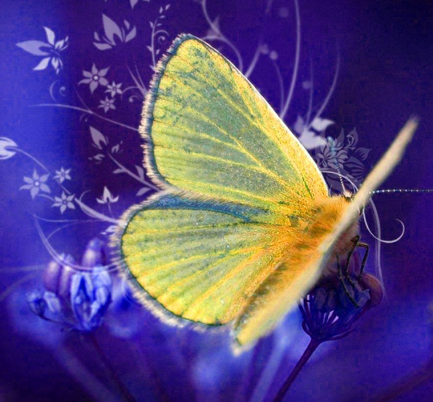 New Butterfly Whatsapp Dp Pictures Hd