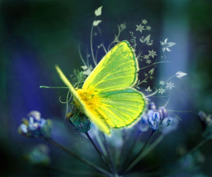 New Butterfly Whatsapp Dp Pictures Images