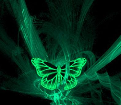 New Butterfly Whatsapp Dp Wallpaper Hd
