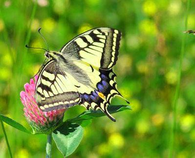 New Butterfly Whatsapp Dp Wallpaper Images