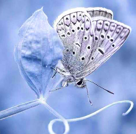 New Butterfly Whatsapp Dp Wallpaper Photo
