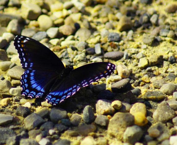 New Butterfly Whatsapp Dp