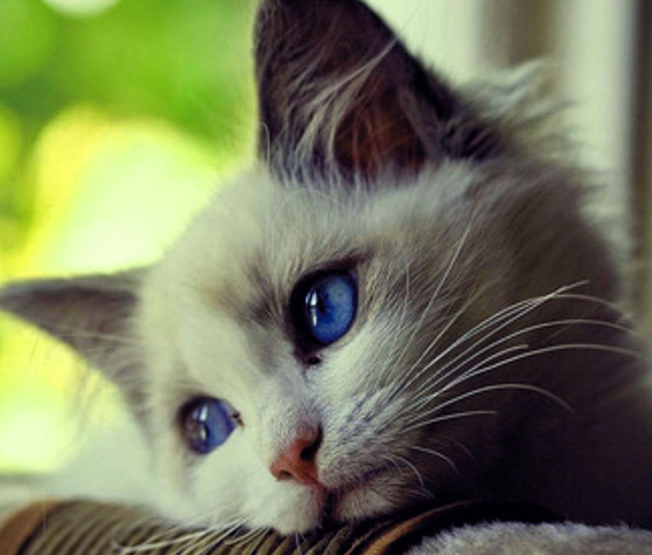 New Cute Sad Dp Download Pics
