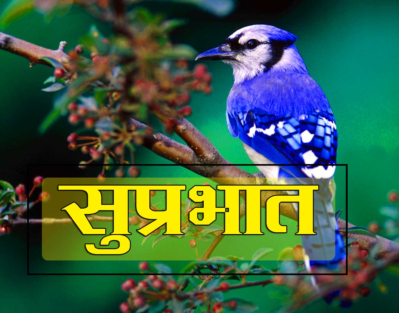 New Suprabhat Download Free