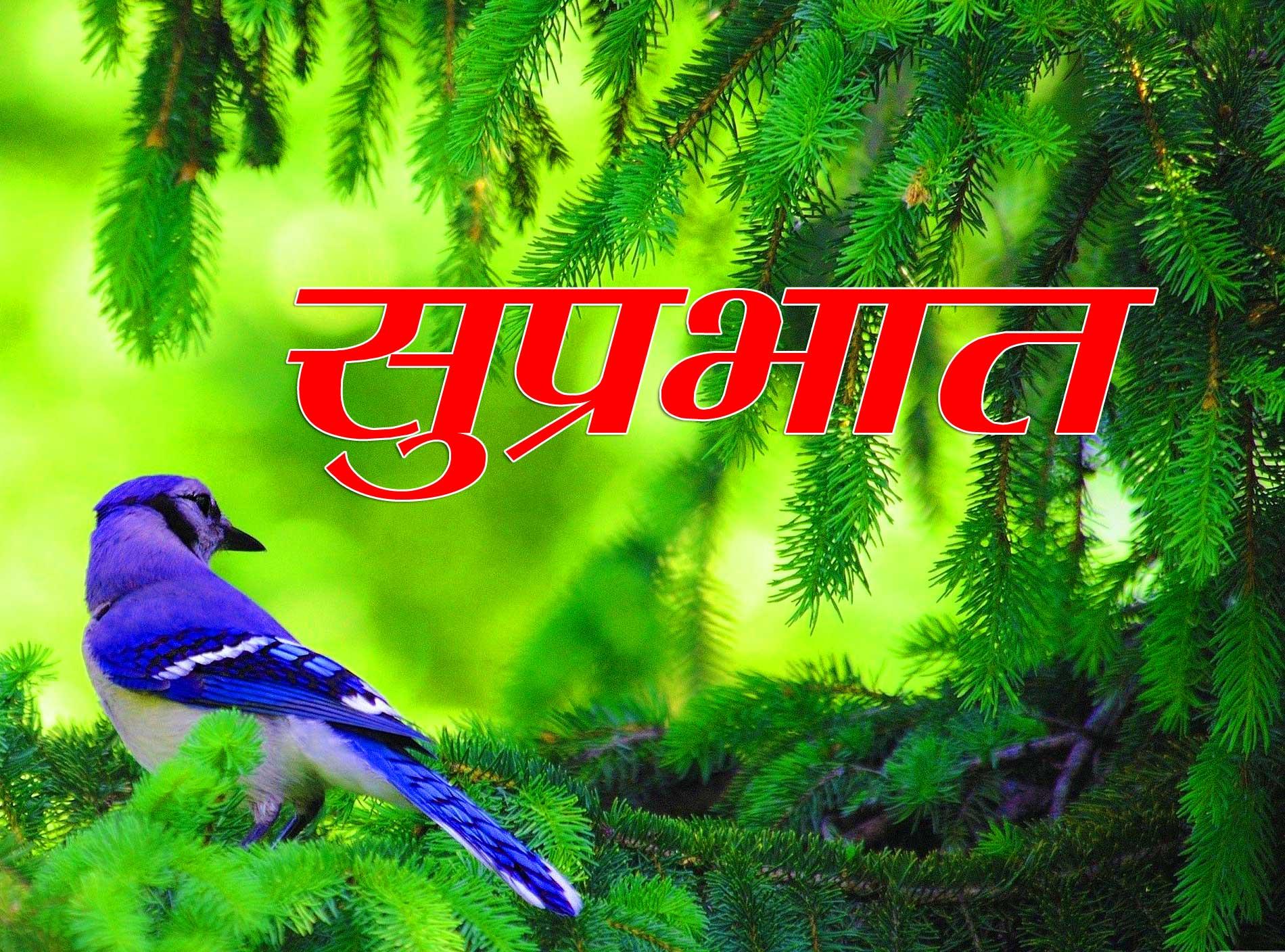 New Suprabhat Wallpaper Free Pics