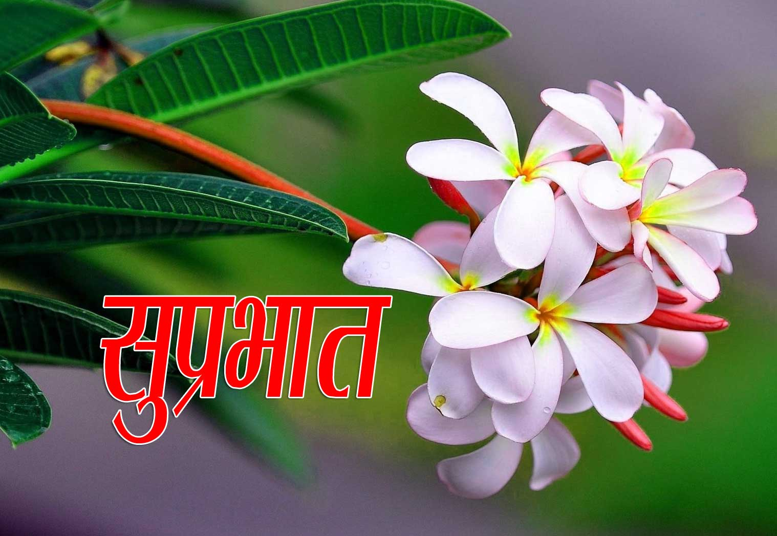 New Suprabhat Wallpaper Images