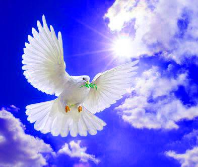 Peace Whatsapp Dp Pics