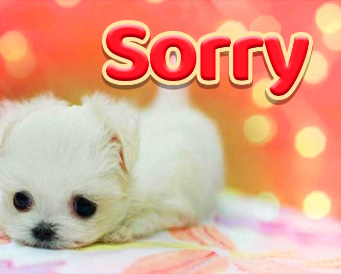 Sorry Whatsapp Dp Free hd