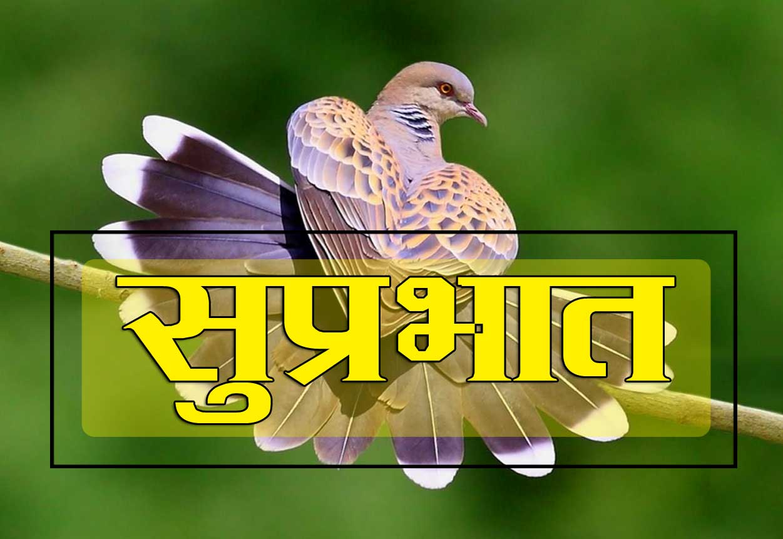 Suprabhatb D
