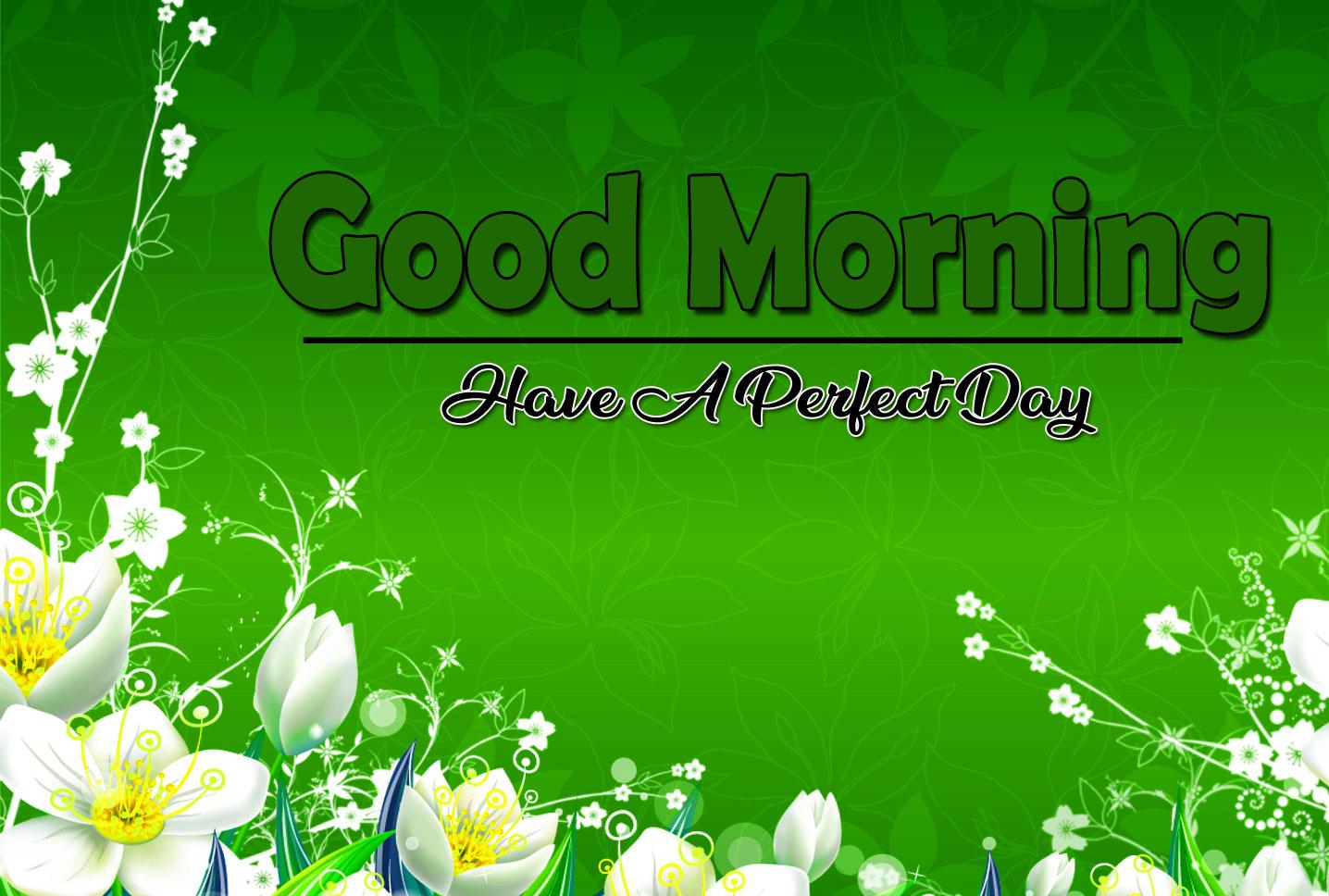 Beautiful Free Flower 4k Good Morning Pics Download