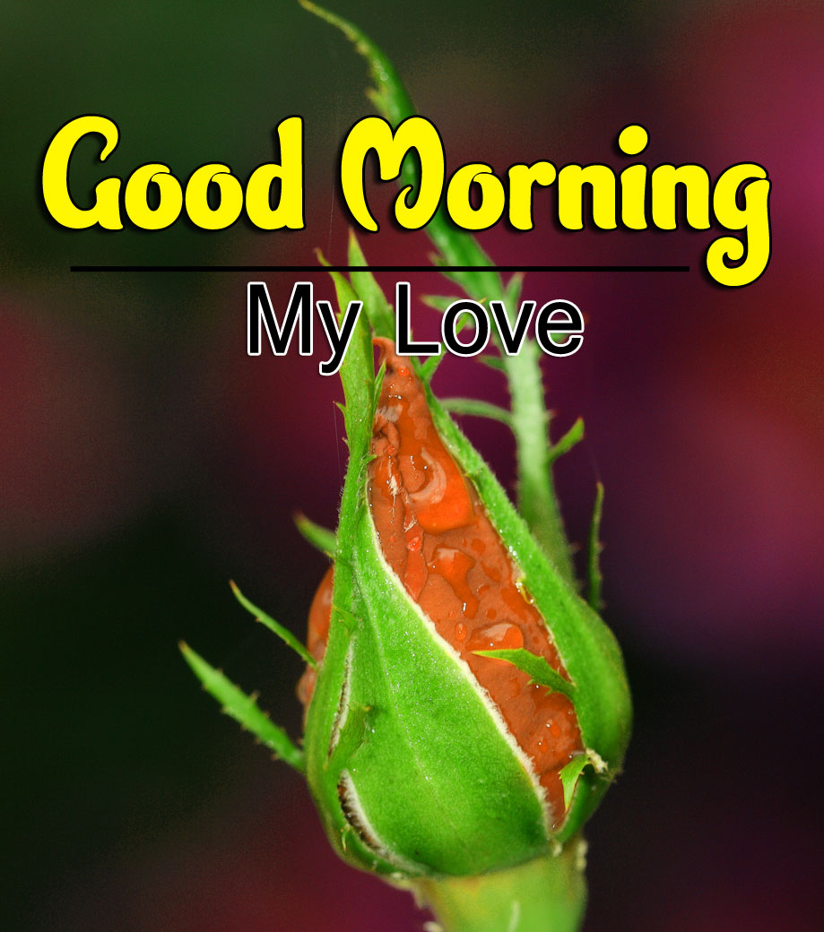 Beautiful Good Morning Wishes Images Pics