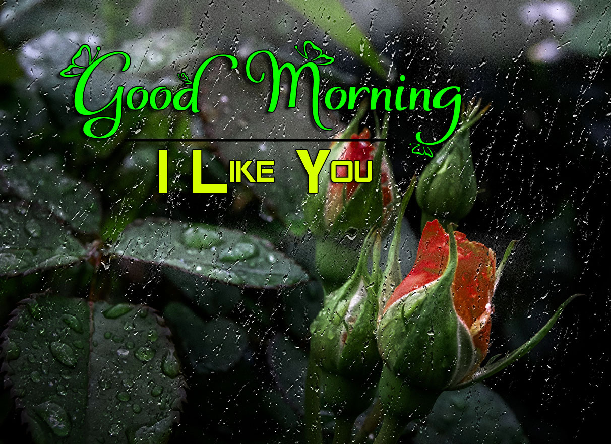 Beautiful Good Morning Wishes Wallpaper Free