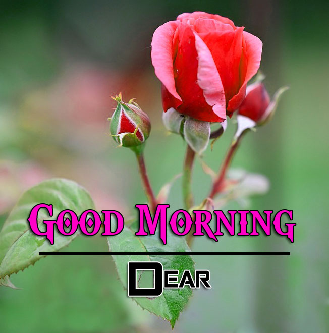 Beautiful Good Morning Wishes
