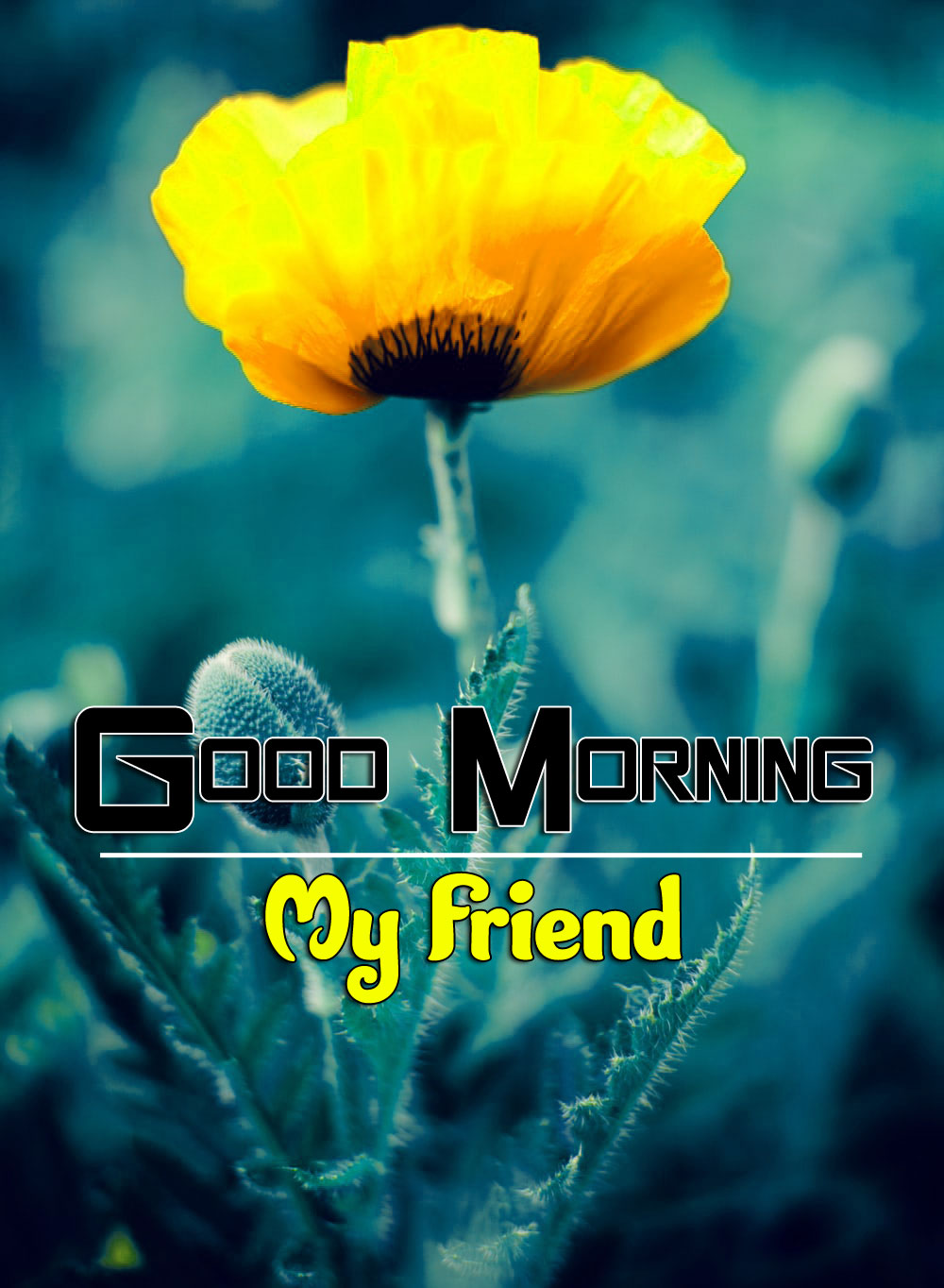 Best Best Good Morning Wishes 4k Pics Download