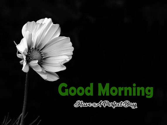 Best Flower 4k Good Morning Images Pics Download