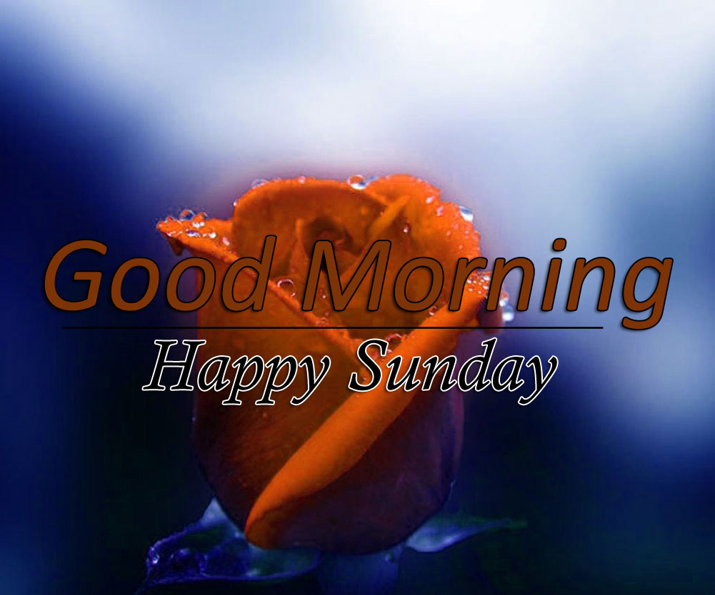 Best Flower 4k Good Morning Photo Download